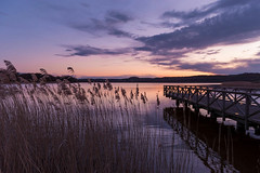 Rügen, Germany (nikonfotoguy) Tags: spring manfrotto tripod light memories 2470 cc lightroom lake nature sunset evening landscape landschaft germany rügen d750 nikon