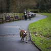 Bulldog, Waterlow Park (London Less Travelled) Tags: uk unitedkingdom england britain british london city urban park highgate waterloo dog animal bulldog
