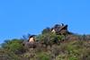 House on the hill (Johann (Sasolburg, RSA.)) Tags: house hill pspprisesurprisemaisonshouses ef70300mmf456isusm canoneos7dmarkii bluesky