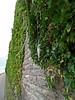 Fundstück (onnola) Tags: koblenz rheinlandpfalz deutschland rhinelandpalatinate germany ehrenbreitstein hochwasser blinker efeu mauer wall ivy fishinglure