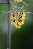 AOS 1.2018-12 (Jordan Cataldo) Tags: aos american orchid society st paul mn winter carnival