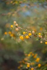 Flower. (LisaDiazPhotos) Tags: phoenix zoo arizona lisadiazphotos flower