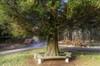 "Resting point ""Sequoia"" (KF-Photo) Tags: holzstapel mammutbaum mammutstamm ruhebank schönbuch wegkreuzung sequoia sitzbank"