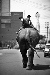 Now That Is Some Ass ! (N A Y E E M) Tags: vertical elephant backside mahout friday afternoon street crbroad chittagong bangladesh windshield