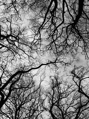 x (MobilShots) Tags: blackandwhite monochrome nature above trees urban abstract iphoneography iphoneartist iphone iphone7 iphone7plus patrickgorden fotografhamburg blende1net