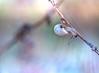 _DSF7803 (Evren Unal Photography) Tags: green leaf closeup macro fujifilm outdoor grass plant texture pattern organic text diagonal depth field foliage carlzeiss touit2850m 50mm minimalism ngc blur bokeh branchlet blossom daisy flower fieldgreen sun sunset sunlight alone artnature art nature color colors dof deep natureart minimal minimalist minimalnature minimalart mini red landscape rain black background garden photoadd sunflower vase wood
