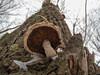 Mushroom (akk_rus) Tags: nikon coolpix p7100 nikonp7100 mushroom гриб nature природа