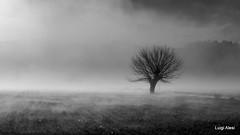 Lost in the fog (Luigi Alesi) Tags: sanseverino italia italy marche macerata san severino rocchetta paesaggio landscape scenery nebbia fog foggy mist misty albero tree natura nature campagna countryside nikon coolpix p330 raw