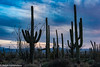 Desert Twilight (Ralph Earlandson) Tags: cactus arizona saguaro sunset saguaronationalpark clouds desert sonorandesert