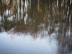 Reflection (TaleOfJoy) Tags: fmvalo cmarkettastenroth finland helsinki landscape reflection heijastus light luontokuva maisema naturephotgraphy puut trees