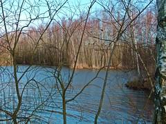 2018-01-17 Rieulay (22)pond (april-mo) Tags: rieulay village hautsdefrance naturepark parcnaturelduhainaut birchtrees