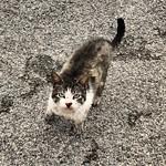 ¿Ande tas metío, Madarfaka? #gatos #gatoscallejeros #cats #photocats #instacats #neko #meow #gatze #gatto #koshka #catsofworld #catsofinstagram #streetcats #chat thumbnail