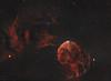 Jellyfish nebula (MaGeOl) Tags: nebula astrophoto astrophotography astronomy stars space sky star telescope filters dust hydrogen qhy ha colour oiii oxygen ic red texture jellyfish 443 astrometrydotnet:id=nova2422631 astrometrydotnet:status=solved