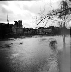 (Koyuki91) Tags: holga holga120cgfn 120 cgfn lomographie lomography paris crue seine flood ile de la cité iledelacité