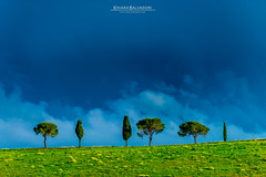 Lonely Trees (Chiara Salvadori Ph) Tags: tuscany valdorcia sanquiricodorcia travelphotography italy toscana agriculture beautiful cipress colors country crete farmland field grass green hill landscape light mist nature outdoors places premium scenery siena sky spring sun tourism travel traveling trip unesco wheat wine