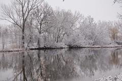 Szigetcsép - Little Danube / Hungary (Torok_Bea) Tags: szigetcsép littledanube hungary duna kisduna danuberiver danube winter