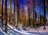 Winterwald (*AdeCo*) Tags: baeume trees wald forest winter snow schnee licht schatten light shadows zauber zauberhaft magisch magical magic sonne sun sonnig sunny farben farbig colour coloured freundlich friendly wood schwansee bayern bavaria germany schwanseepark schwangau hohenschwangau