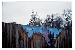 (schlomo jawotnik) Tags: 2018 januar wolfenbüttel schlomostierwelt zaun vögel himmel bäume kodakgold200 usw
