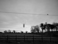 First Fly Day Friday Fly of 2018 (Explored) (JulieK (thanks for 6 million views)) Tags: hfdf hff fence garden fly diptera macro window trees bw canonixus170 nature wildlife fauna monochrome blackandwhite 2018onephotoeachday inexplore