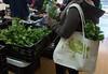 CitySeed_WinterMarket_01132018lr-013 (cityseednh) Tags: cityseed tote lettuce produce learosemarystudios
