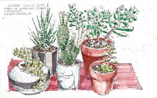Aemelias Plants