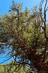 Mesa Verde National Park (dpsager) Tags: colorado dpsagerphotography mesaverde mesaverdenationalpark montezumacounty nationalpark petroglyphpointtrail