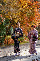 Women wearing Japanese traditional clothes (phuong.sg@gmail.com) Tags: asia asian attractive autumn back background beautiful beauty clothes clothing color colorful culture cute dress fall fashion female foliage garden girl green japan japanese kimono kyoto leaf maple nature one orange oriental park pattern people person portrait rear red temple tradition traditional travel view walking wearing woman women yellow young