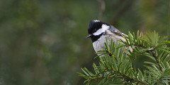 Garrapinos (coverkill) Tags: aves navarra pamplona naturaleza