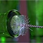 Bottle Brush thumbnail