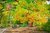 autumn cottonwood 19Oct14 (johngpt) Tags: fujifilmfinepixx100 autumn cottonwood trees tree places riograndenaturecenter sliderssunday hss