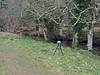 Recording wind chimes and birds by River Teign (Philip_Goddard) Tags: europe unitedkingdom britain british britishisles greatbritain uk england southwestengland devon dartmoornationalpark drewsteignton teignvalley teigngorge riverteign recording sonypcmm10 windchimes chimes