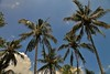 IMG_0365 (Kalina1966) Tags: bali island indonesia palm
