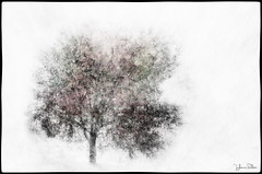 just one . . . (YvonneRaulston) Tags: tree texture atmospheric art abstract creativeartphotography calm colour dream emotive peaceful fineartgrunge impressionist moody moments sony photoshopartistry surreal