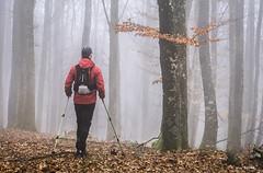 Caminando bajo la niebla (Jabi Artaraz) Tags: kerman jabiartaraz hayedo nature niebla invierno otoño hojas hojarasca