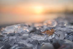 captive (Marc McDermott) Tags: winter ice sunset leaf frozen cold warm beach lakeontario canada water shore