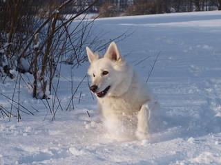 Eika im Schnee