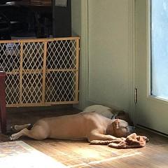 He's worn out today!!!!! (jenstalder) Tags: ifttt instagram tony horton beachbody shaun t fitness p90x insanity health fun love
