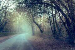 20180205.jpg (JVAZQUEZ59) Tags: santiagodecompostela néboa carballeira niebla sanmarcos vilamaior
