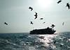 Race between aquatic and aerials (mh.mahmud92) Tags: birds aerials aquatic sea nature ship