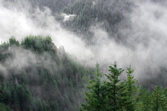 (rowjimmy76) Tags: elkmountain coastrange tillamookstateforest hiking nature landscape canon clouds pnw pacificnorthwest oregon mist tree conifer weather green outdoor sl1 1855mm
