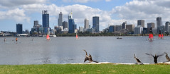 (054/365) Friday February 23rd (philk_56) Tags: perth western australia swan river skyline water birds darters