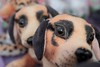 Puppies (Rajavelu1) Tags: streetphotography dog puppies colours art creative depthoffield candidstreetphotography