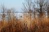 grasses, lake (kerwilliger) Tags: lake mendota frozen ice winter january madison wisconsin snow