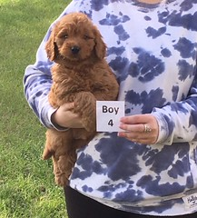 Sophie Boy 4 2-18