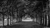 Oublions les couleurs (musette thierry) Tags: arbre musette thierry d600 nikon promenade bois allée 90mm28