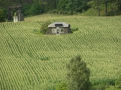 2006, 08 (Vfersal) Tags: geografíarural geografíaagraria maiz maizal coaña asturias españa spain arquitecturatradicional verde arqueologíaindustrial patrimonio paisajerural paisajedeinteréscultural paisajepatrimonial