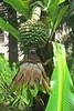 fruits and flower :) (green_lover) Tags: banana plant plants green botanicalgarden laorotava tenerife canaryislands nature
