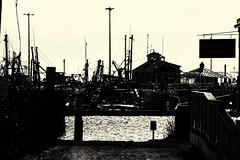 Dark Harbor (PAJ880) Tags: provincetown ma harbor fishing fleet mono bw cape cod light am industry