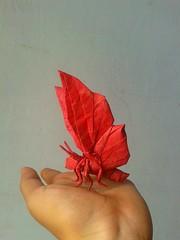 Butterfly - S.taro (javier vivanco origami) Tags: butterfly staro origami ica peru javier vivanco