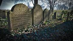 Jewish Cemetery (dr_scholz@ymail.com) Tags: cemetery hebrew jewish tumbstone graveyard graves winter lightandshadow leicam240 superelmarm21mmasphf34